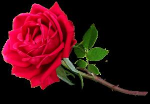 Różaniec świętych - nie jesteś sam